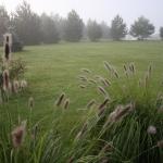 Pasiauseline-soruole-Daugiametis-augalas-24