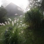 Pasiauseline-soruole-Daugiametis-augalas-26
